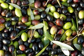 olive invaiatura